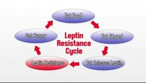 What Is Leptin Function