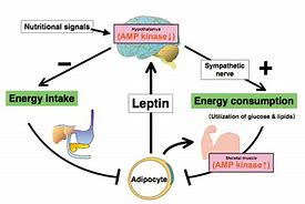 Is there a medication for leptin resistance?