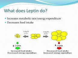 Leptin XI Hormone Type